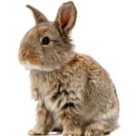 Kaninchen – gesellige Langohren mit großem Bewegungsdrang