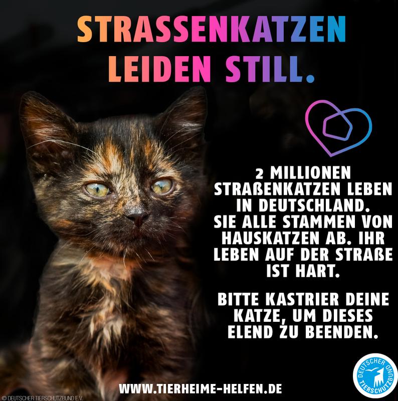 Read more about the article #Hilfe für Straßenkatzen