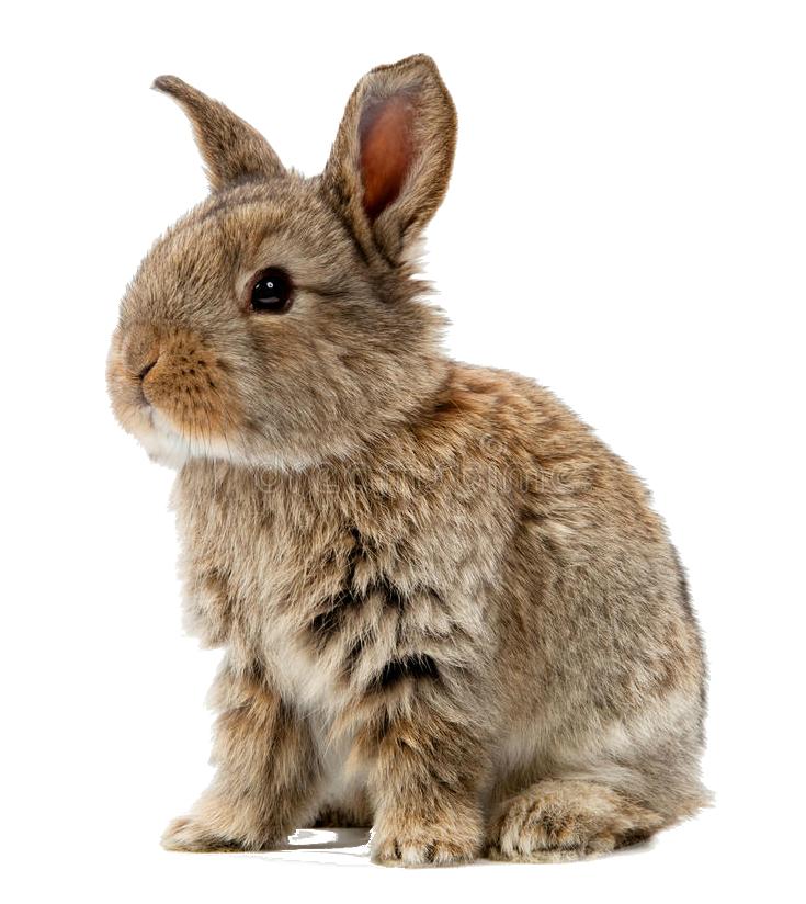 You are currently viewing Kaninchen – gesellige Langohren mit großem Bewegungsdrang